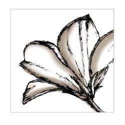Shutter Wild Rose Graphic Art on Canvas