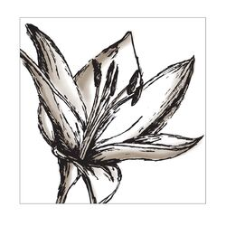 Shutter Lily Graphic Art on Canvas
