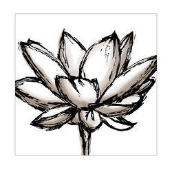 Shutter Lotus Graphic Art on Canvas