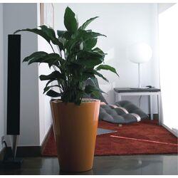 Fang Cono Alto Lacquered Round Flower Pot Planter