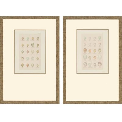 Egg Study by Seebohm 2 Piece Framed Graphic Art Set