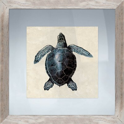 Coastal Sea Turtle Framed Graphic Art 1-21214B