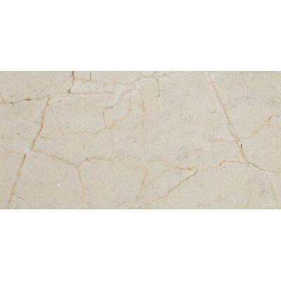 Harrison 6 x 3 Unpolished Polished Natural Stone Field Tile in Crema Marfil Classico