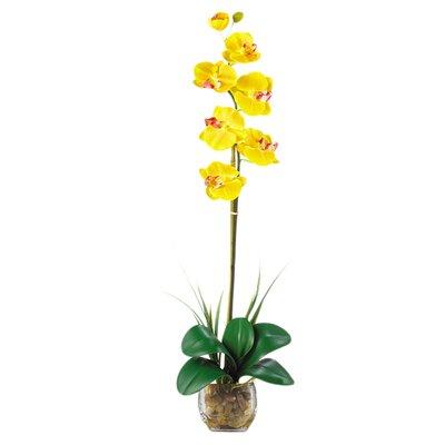 Liquid Illusion Single Phalaenopsis Silk Orchid Flower in Yellow 1104-YL