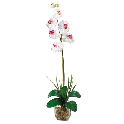 Liquid Illusion Single Phalaenopsis Silk Orchid Flower 1104-WH