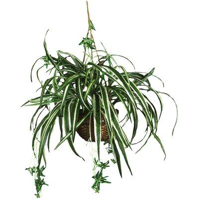 Silk Spider Hanging Plant in Basket 6607
