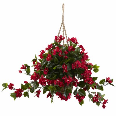 Bougainvillea Hanging Plant in Basket