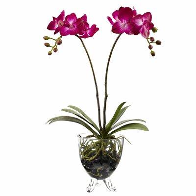 Double Phalaenopsis Elegance Flowers 4831