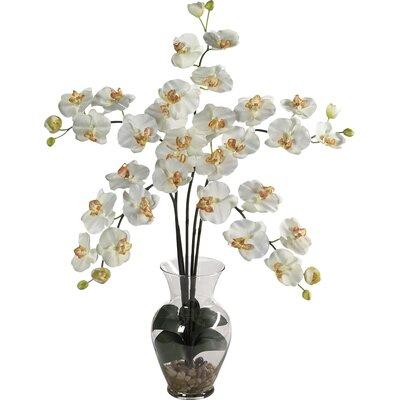 Liquid Illusion Phalaenopsis Silk Orchid Arrangement in Cream 1106-CR