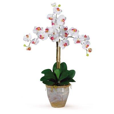 Triple Phalaenopsis Silk Orchid Flower 1017-WH