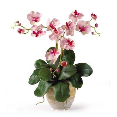 Triple Mini Phalaenopsis Silk Orchid Flowers in Pink White
