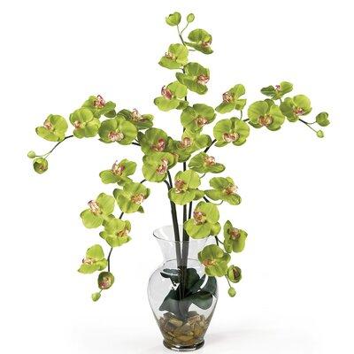 Liquid Illusion Phalaenopsis Silk Orchid Arrangement in Green 1106-GR