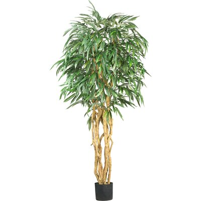 Weeping Ficus Tree in Pot 5213