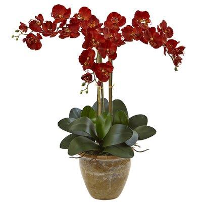 Orchids Floral Arrangement in Decorative Flower Color: Autumn BBMT3841 40419441