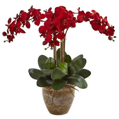 Orchids Floral Arrangement in Decorative Flower Color: Red BBMT3841 40419442