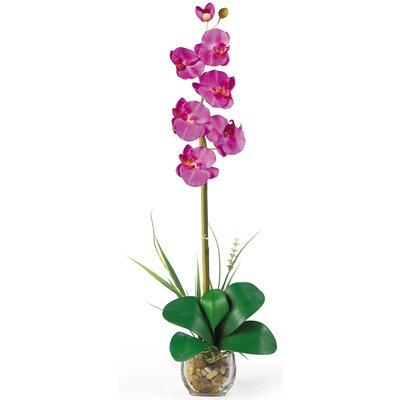 Liquid Illusion Single Phalaenopsis Silk Orchid Flowers 1104-OR