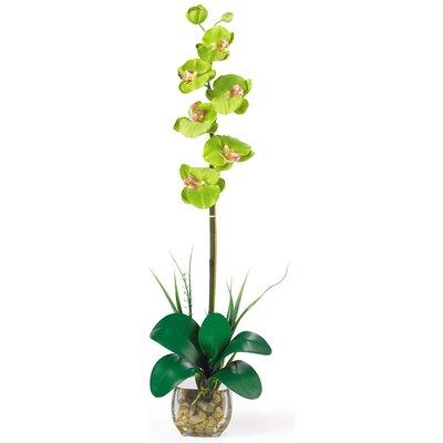 Liquid Illusion Single Phalaenopsis Silk Orchid Flower in Green 1104-GR