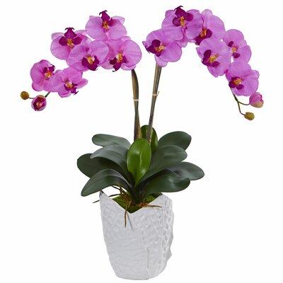 Double Phalaenopsis Orchid Floral Arrangement in Decorative Vase