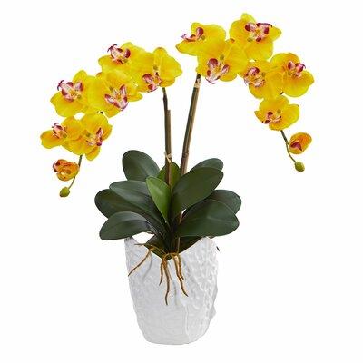 Double Phalaenopsis Orchid Floral Arrangement in Decorative Vase Flower Color: Yellow