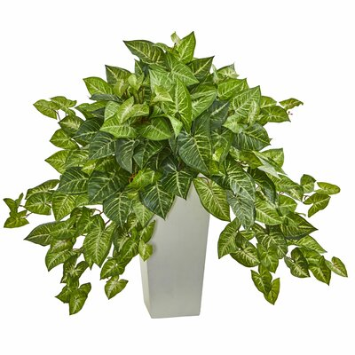 Nephthytis Ivy Plant in Tower Planter