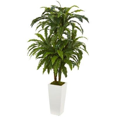 Marginatum Ficus Plant in Tower Vase