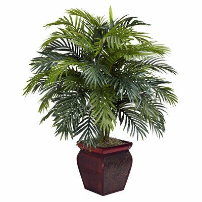 Areca Floor Plant in Decorative Pot