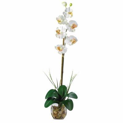 Liquid Illusion Single Phalaenopsis Silk Orchid Flower in Planter 1104-CR