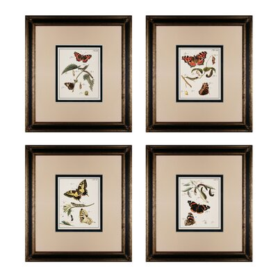 Butterfly Metamorphisis 4 Piece Framed Graphic Art Set