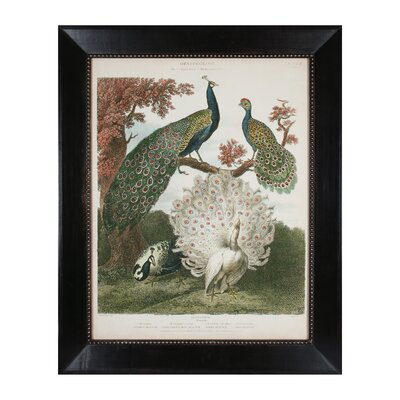 Peacock Gathering Framed Graphic Art