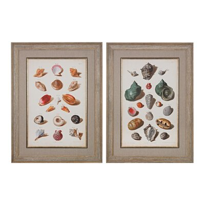 Muller Shells 2 Piece Framed Graphic Art Set