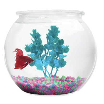 Aqua Accents Aquarium Bowl Size: 7 H x 8 W x 8 D