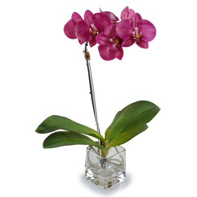 Faux Phalaenopsis Orchid Arrangement, New Growth Designs 15462WH