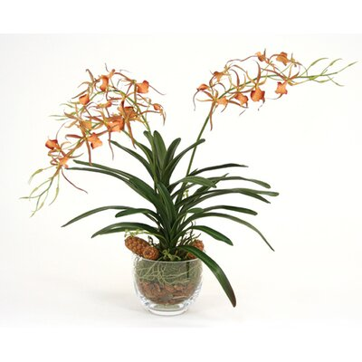 Silk Spider Orchid in Glass Bowl 4926