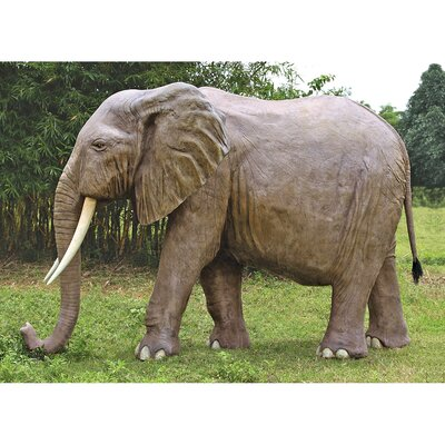NE100059 Enormous African 885715
