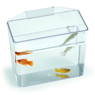 Aquarium Specimen Container Tank Size: 7 H x 3.25 W x 6 D