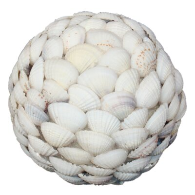 Clam Shell Ball Size: Medium