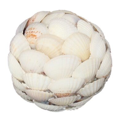 Clam Shell Ball Size: Small
