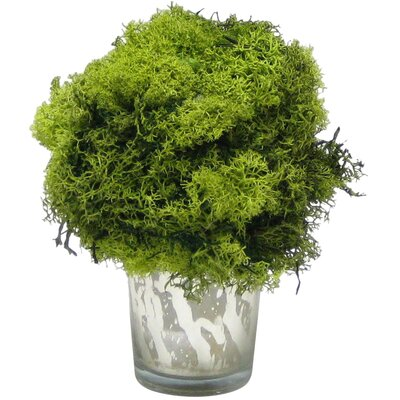 Preserved Reindeer Moss Topiary
