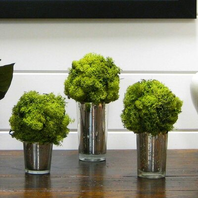 3 Piece Moss Topiary Balls