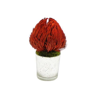 Banksia Floral Arrangement Flower/Leaves Color: Red