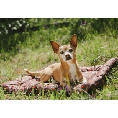 Maxey Outdoor Chill Dog Pad Size: Medium (1.77 H x 30 W x 20 D), Color: Brown