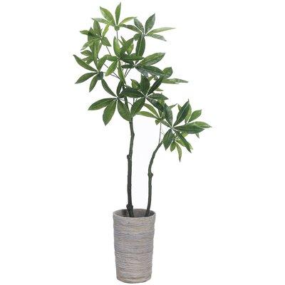 Eva Pachira Aquatica Foliage Tree in Planter