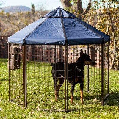 Advantek Halpern Pet Gazebo Color: Cobalt Sky