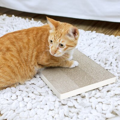 Eco Friendly Cat Scratching Board Color: Aspen White