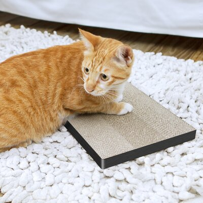 Eco Friendly Cat Scratching Board Color: Black