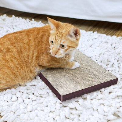Eco Friendly Cat Scratching Board Color: Espresso
