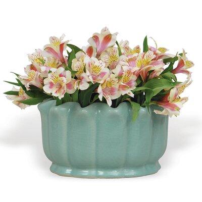 Jacqueline Novelty Pot Planter ACBS-108-01