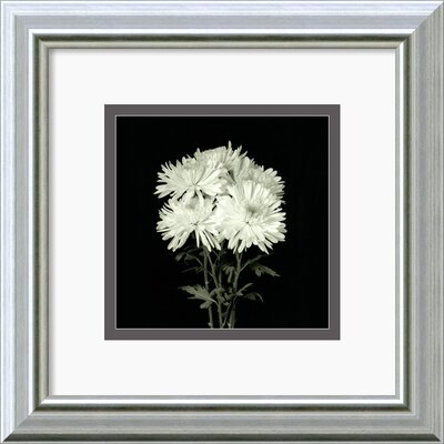 'Flower Series IX' by Walter Gritsik Framed Photographic Print DSW140392