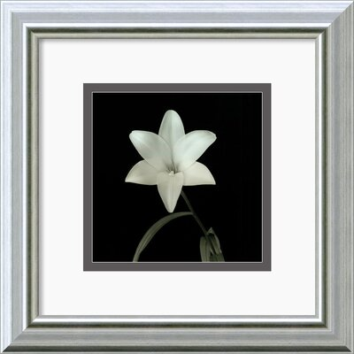 'Flower Series VI' by Walter Gritsik Framed Photographic Print DSW140394