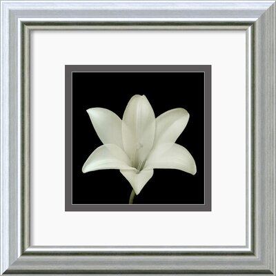 'Flower Series VII' by Walter Gritsik Framed Photographic Print DSW140446
